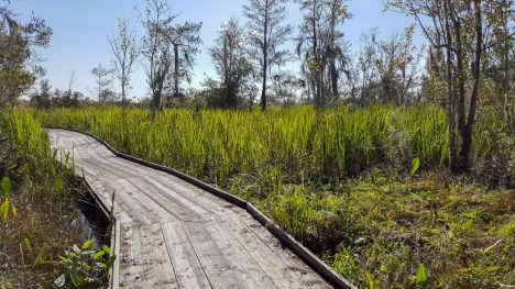 Strolling in the Barataria Preserve in Jean Lafitte National Historical Park & Preserve